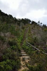 中部砲台跡への山道