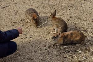 山の上のウサギたち
