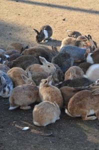 たくさんのウサギ