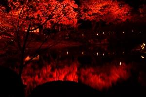 縮景園のライトアップ