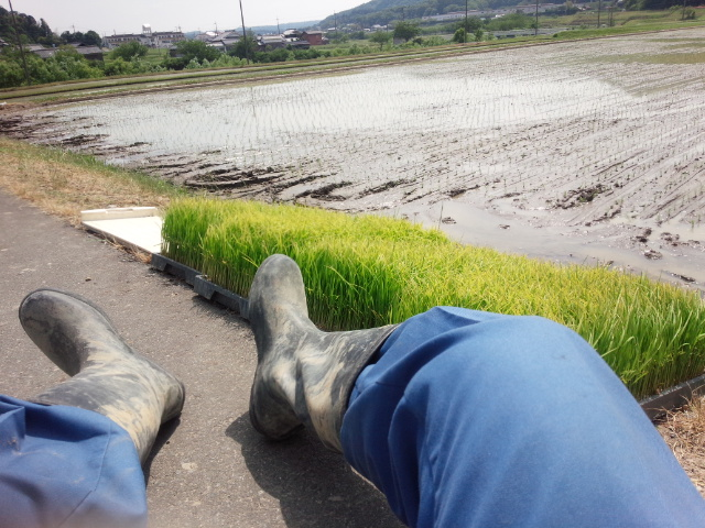 田植え20153