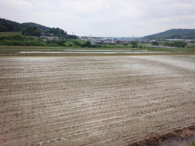 田植え20158