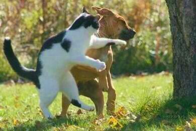 猫パンチBdWzAG2CEAAna1N