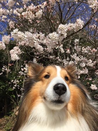 3花見 ロッキー