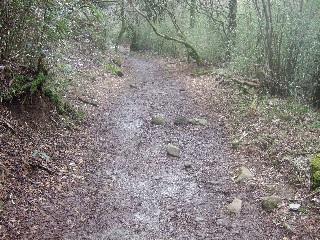 下り坂の土の道_H22.04.18撮影