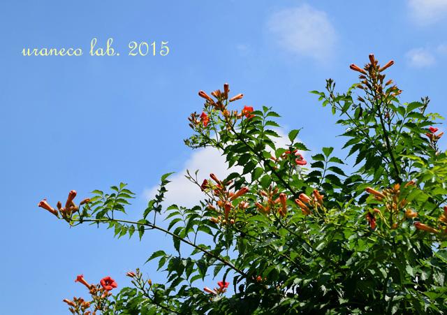 7月2日梅雨の晴れ間