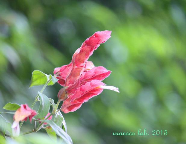 7月22日green and red