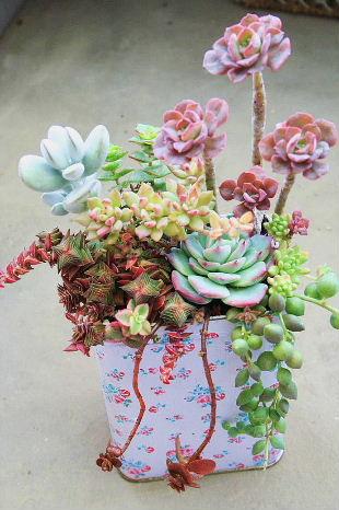 花柄缶 寄せ植え