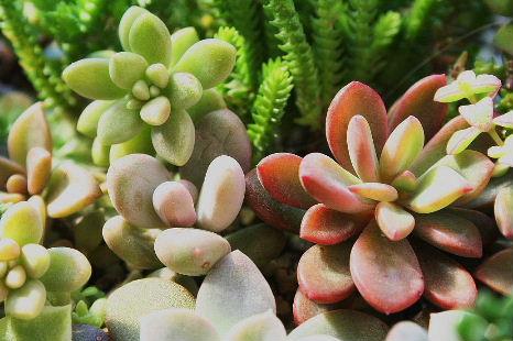 プラ鉢 ぶっ込み 寄せ植え