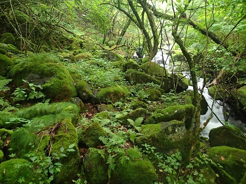 緑の崖20150706