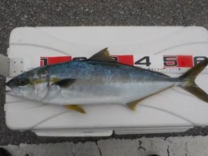 DSCN0449 - 60cm