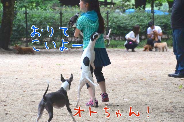 DSC_4172_20150522103835644.jpg