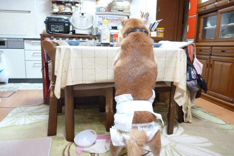 テーブルあさる