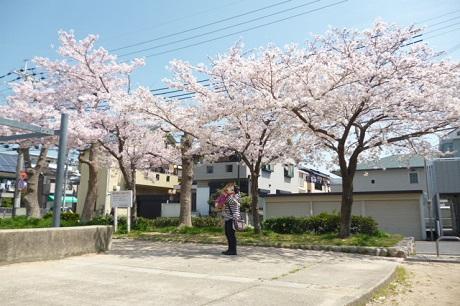 桜と秀斗♡①