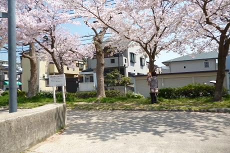桜と秀斗♡②