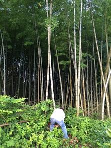 竹も伐採してきました。