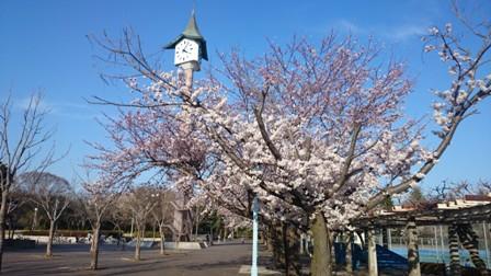 二の宮公園の桜