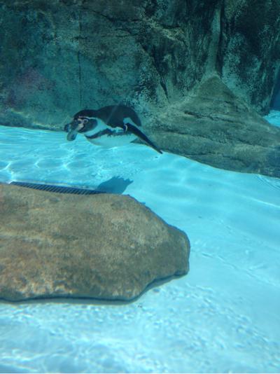 とべ動物園 ペンギン