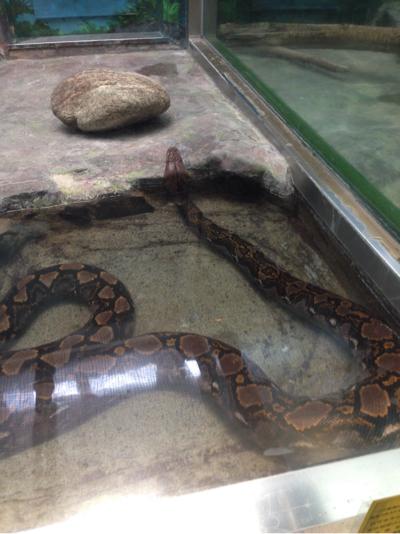 とべ動物園 ニシキヘビ