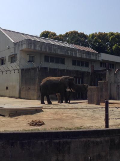 とべ動物園 象