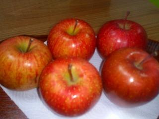 まつぼっくり りんご