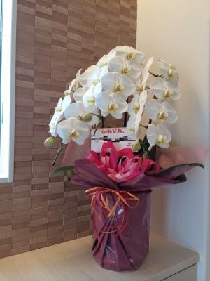 引渡し 花