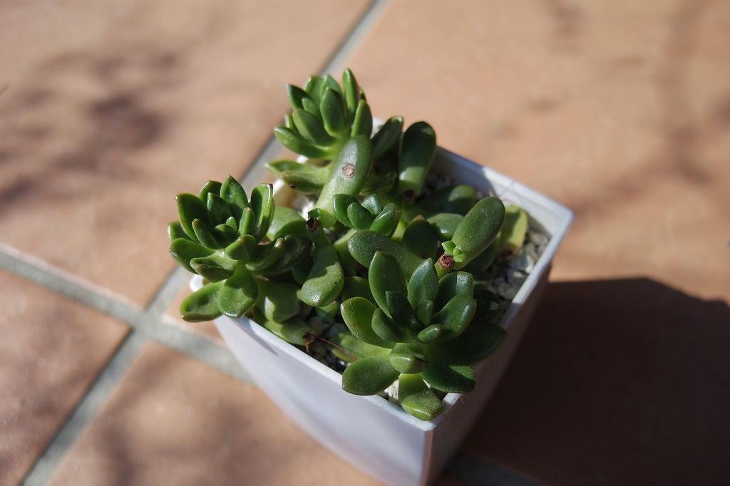 松の緑02