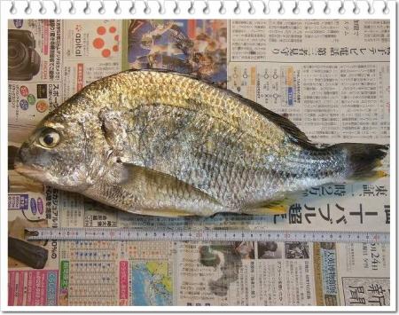 fish 002