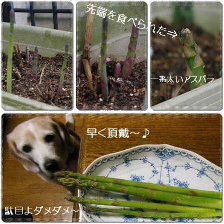 cats_20150406134532aef.jpg