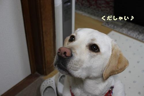 ケノ三歳3