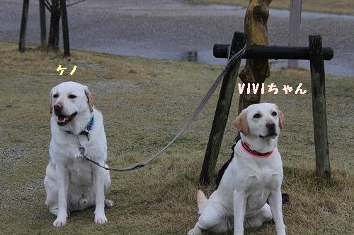 VIVIkeno.jpg
