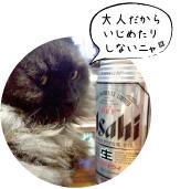 zen20150109_ナツ
