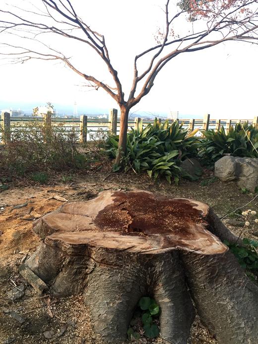 150104_07水天宮折れた木