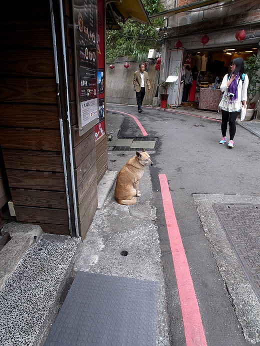 150126_19犬ちゃん