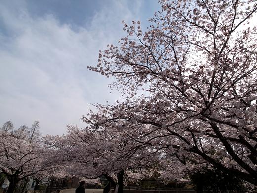 150328_09桜