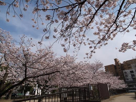 150328_10桜