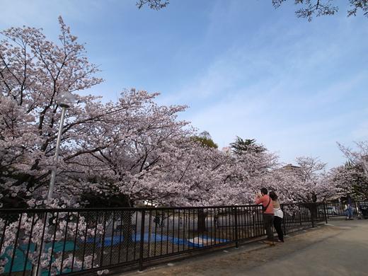 150328_12桜