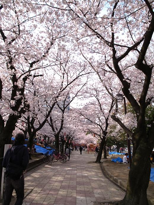 150328_08小頭町桜