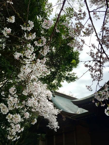 150331_06高良山愛宕神社