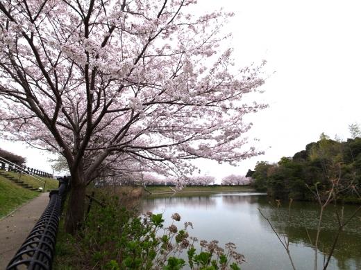150331_01浦山公園