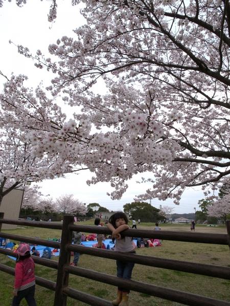 150331_03子供と桜