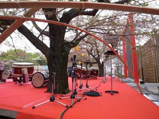 150409_11ステージから桜