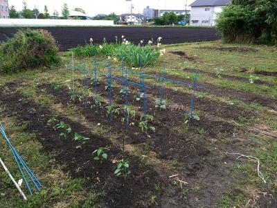 150501_01菜園