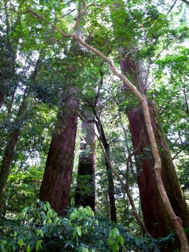 150625_24木々たち