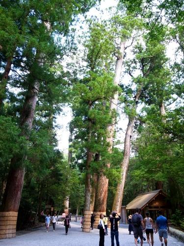 150625_25木々たち