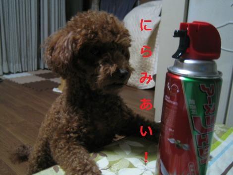 IMG_7213_convert_20150516153216.jpg