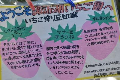 諏訪湖イチゴ園 (5)