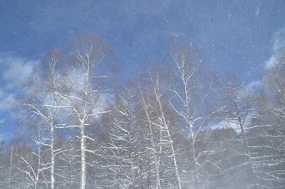 雪の御射鹿池 (5)