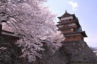 2014年高島城の桜 (1)