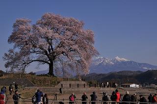 わに塚の桜と多くのカメラマン